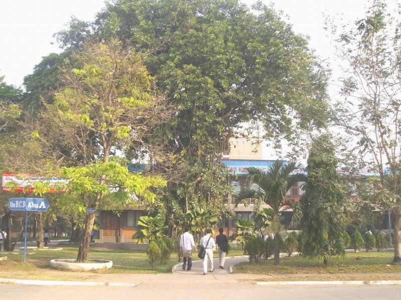 Phía sau cổng trong là khu khuôn viên, biểu tưởng làm mọi người nhớ nhất là hình ảnh cây đa cổ thụ.